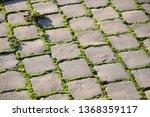 moss  bryophyta   vivid green...   Shutterstock . vector #1368359117