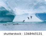 Gentoo Penguins Playing On A...