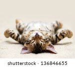 Stock photo the small british kitten sleeps 136846655