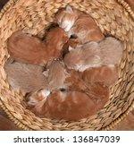 Seven Little Red Kittens Lying...