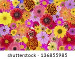 Stock photo floral chaos abstract collage from simple summer flowers background 136855985