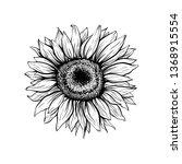 sunflower hand drawn vector... | Shutterstock .eps vector #1368915554