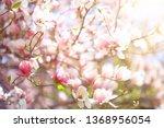 tender spring flowers... | Shutterstock . vector #1368956054