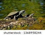 brisbane  q  australia   sept... | Shutterstock . vector #1368958244
