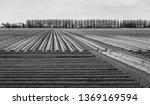 dutch landscape with potatoe... | Shutterstock . vector #1369169594