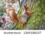 small squirrel sits on the tree ... | Shutterstock . vector #1369188107