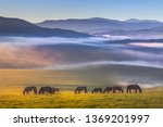 Small photo of Colorful view of a herd of horses peacefully grazing. Folded hills in a blue haze. Radiant landscape.Absolutely perfect picture. Sunny meadow covered with blue-pink fog.Altai Republic.Siberia. Russia.