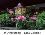 lantern  entwined with roses. | Shutterstock . vector #1369235864