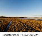 birdwatching spot in helsinki ... | Shutterstock . vector #1369253924