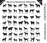 big set of 49 different dogs ... | Shutterstock .eps vector #1369329911