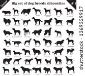 big set of 49 different dogs ... | Shutterstock .eps vector #1369329917