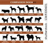 set of 20 companion dogs.... | Shutterstock .eps vector #1369330601