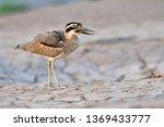 beautiful bird  great thick... | Shutterstock . vector #1369433777