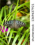 the name of the butterfly is... | Shutterstock . vector #1369637921
