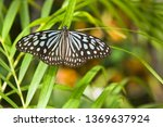 the name of the butterfly is... | Shutterstock . vector #1369637924