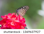 the name of the butterfly is... | Shutterstock . vector #1369637927
