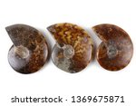 ammonites isolated on white | Shutterstock . vector #1369675871