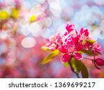 beautiful pink flowers bloom... | Shutterstock . vector #1369699217