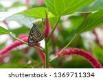 the scientific name of this... | Shutterstock . vector #1369711334