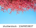 beautiful pink flowers bloom... | Shutterstock . vector #1369853837