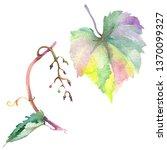 grape green leaves in a...   Shutterstock . vector #1370099327