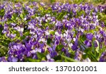 spring nature photography wild...   Shutterstock . vector #1370101001