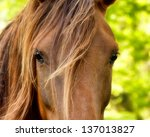Horse Watching