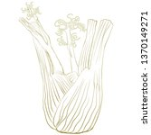 fennel bulb  hand drawn vector... | Shutterstock .eps vector #1370149271