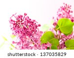 Lilac branch on light  background. selective focus - stock photo