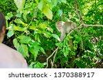 Children  Feeding Monkey On A...