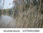 canal through reed beds | Shutterstock . vector #1370441084