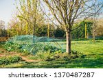 natural garden with trees and... | Shutterstock . vector #1370487287
