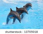 Three Bottlenose Dolphins...