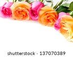Border of beautiful orange and pink roses  on light background - stock photo
