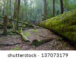 Fallen Trees Covered In Moss I...