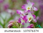 orchid | Shutterstock . vector #137076374