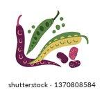green bean varieties fresh... | Shutterstock .eps vector #1370808584