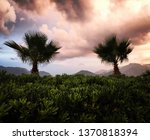 two palm trees against dramatic ... | Shutterstock . vector #1370818394