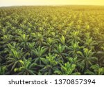 aerial view of palm oil... | Shutterstock . vector #1370857394