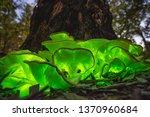 Bioluminescent Ghost Mushroom ...