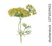 dill branch isolated on white... | Shutterstock . vector #1371019421