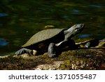 brisbane  q  australia   sept... | Shutterstock . vector #1371055487