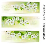 three banners with blossoming... | Shutterstock .eps vector #137129519