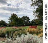 english garden nature flowers... | Shutterstock . vector #1371396101