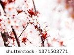 botanical beauty  dream garden... | Shutterstock . vector #1371503771