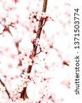 botanical beauty  dream garden... | Shutterstock . vector #1371503774