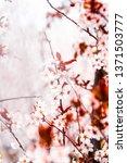 botanical beauty  dream garden... | Shutterstock . vector #1371503777