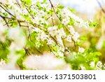 floral beauty  dream garden and ... | Shutterstock . vector #1371503801
