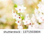 floral beauty  dream garden and ... | Shutterstock . vector #1371503804