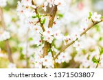 floral beauty  dream garden and ... | Shutterstock . vector #1371503807